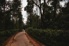 Ścieżka przez zielonego ogródu fotografia royalty free