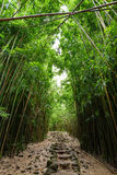 Ścieżka przez zwartego bambusowego lasu, prowadzi sławny Waimoku Spada Popularny Pipiwai ślad w Haleakala parku narodowym na Maui Obraz Royalty Free