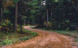 Ścieżka straszny las być może? zdjęcia stock