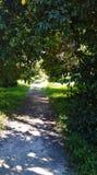 Ścieżka wśrodku ogródu botanicznego fotografia royalty free