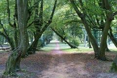 Ścieżka w ładnym starym parku fotografia stock