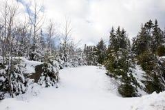 Ścieżka w śnieżnych drewna Zdjęcia Royalty Free