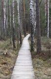 Ścieżka w bagnie Zdjęcie Royalty Free