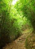 Ścieżka w bambusowym lesie obraz royalty free