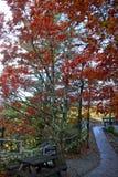 Ścieżka w Blue Ridge Mountains Zdjęcie Royalty Free