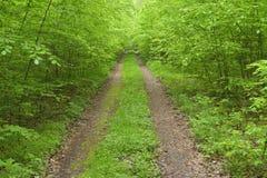 Ścieżka w Bukowym lesie fotografia royalty free