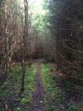Ścieżka w ciemnym lesie Fotografia Royalty Free