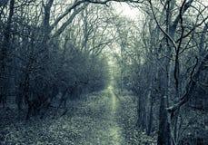 Ścieżka w ciemnym strasznym parku Zdjęcia Royalty Free