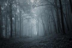 Ścieżka w ciemnym tajemniczym lesie z mgłą obraz royalty free