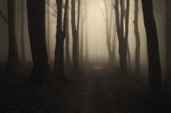 Ścieżka w ciemnym tajemniczym lesie z mgłą Zdjęcia Royalty Free