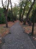 Ścieżka w cmentarzu Obraz Stock