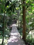 Ścieżka w dżungli w Taman Negara, Malezja obraz royalty free