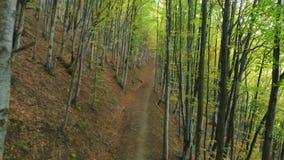 Ścieżka w Deciduous lasu buku alei zdjęcie wideo