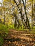 Ścieżka w deciduous lesie w jesieni Obraz Stock