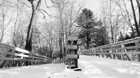 Ścieżka w drewnach zdjęcia stock