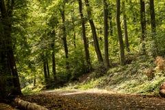 Ścieżka w drewnach zdjęcie royalty free