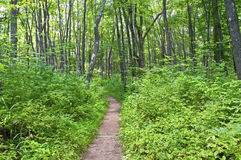 Ścieżka w drewnach zdjęcie stock