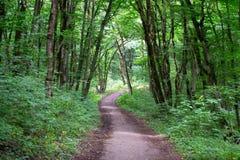 Ścieżka w drewnach obrazy stock