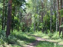 Ścieżka w drewnach Obraz Stock