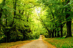 Ścieżka w drewnach fotografia stock
