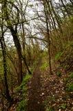 ścieżka w drewnach w wiośnie Obrazy Stock