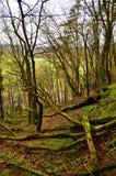 ścieżka w drewnach w wiośnie Obraz Stock