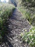 Ścieżka w drewnie Zdjęcie Stock