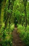 Ścieżka w drewnie Obrazy Royalty Free