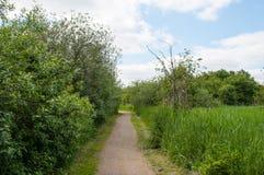 Ścieżka w Duńskiej naturze w Ballerup zdjęcia royalty free