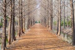 Ścieżka w forrest zdjęcie royalty free