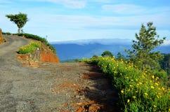 Ścieżka w górę wzgórza przy herbacianymi plantacjami Obrazy Royalty Free