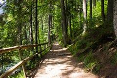 Ścieżka w górach Obraz Royalty Free