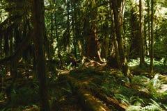 Ścieżka w głębokim lesie Zdjęcie Stock