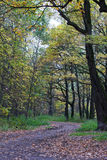 Ścieżka w jesień lasu parku Obrazy Stock