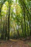 Ścieżka w jesień lesie Zdjęcie Royalty Free