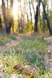 Ścieżka w jesień lesie zamazującym Fotografia Stock