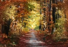 Ścieżka w jesień parku obrazy stock