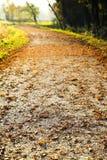 Ścieżka w jesieni Zdjęcia Royalty Free