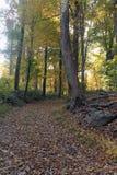 Ścieżka w jesieni drewnach Obrazy Royalty Free