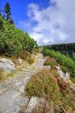 Ścieżka w Krkonose Fotografia Royalty Free