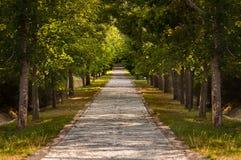 Ścieżka w lesie Zdjęcie Stock