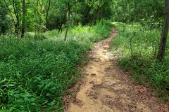 Ścieżka w lesie Fotografia Stock