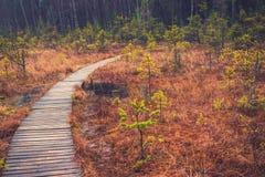 Ścieżka w Lesie obraz royalty free