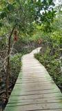 ścieżka w lesie Fotografia Royalty Free