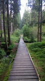 ścieżka w lesie Obrazy Stock