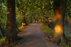 Ścieżka w lesie między drzewami Obraz Stock