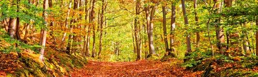 Ścieżka w lesie na pogodnym jesień dniu obrazy stock