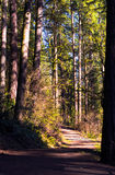 Ścieżka w lesie w wiosny świetle słonecznym Zdjęcia Stock