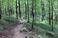 Ścieżka w Mamutowym jama parku narodowym Zdjęcie Royalty Free