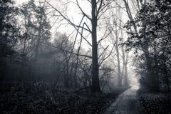 Ścieżka w mgłowym lesie zdjęcia stock